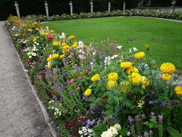 Многолетние цветы вдоль дорожек на даче
